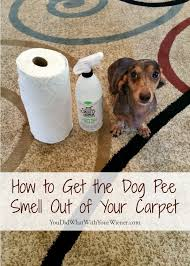 dog smell out of your carpet