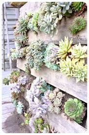 recycled pallet vertical succulent wall