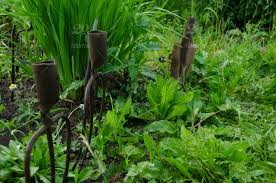 Rusty Iron Grass Forks To Decorate A Flowerbed Fence An Old Vintage Garden Tool Is Stuck In The Ground Among Green Plants Of The Countryside Design Background With Pitchfork Copy Space For