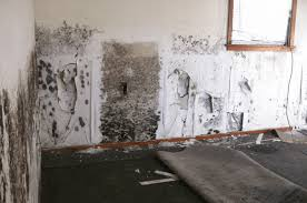 the 12 types of mold how to recognize