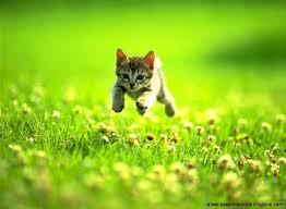 cat kitten photo look hd wallpaper