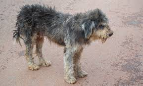 is your dog s coat dry dull try this