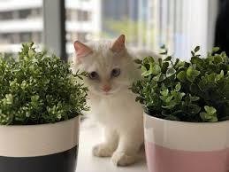 15 houseplants that won t poison pets