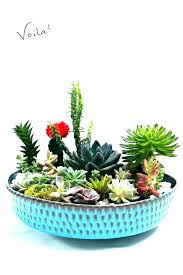 cactus garden garden idea