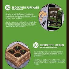 jual plant fun bonsai starter kit diy