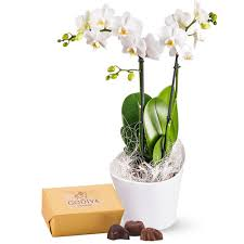 orchids chocolates delivery in