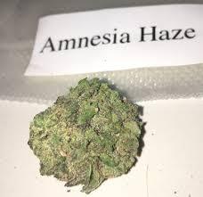 Amnesia Haze Sativa Strain - 10G Potent USA