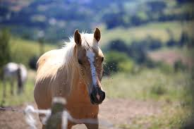 diy fly spray recipes for horses