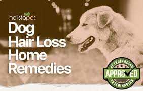 dog hair loss home remes the