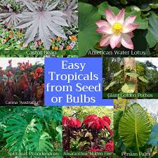 easy tropicals from seed or bulbs