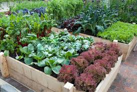 7 gorgeous raised bed vegetable gardens