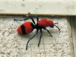 Get Ant Looking Bug With Wings Background