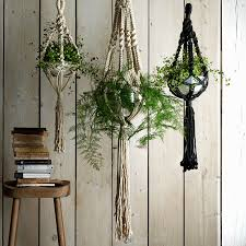 the best plants for your home portia park