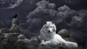 wolf wallpaper 1920x1080 40957