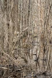realtree max 5 waterfowl concealment
