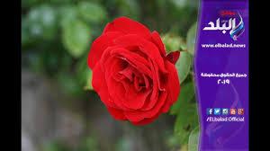 صدى البلد أحدث أشكال بوكيهات الورد وأسعارها في عيد الحب Youtube