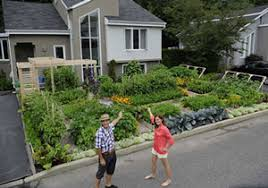 urban gardening in company s front yard