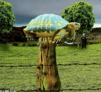 Ch 20 Turtle On The Fence Post English Quiz Quizizz