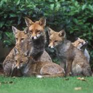2016 fox families news university