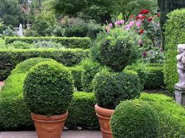 boxwood garden topiary