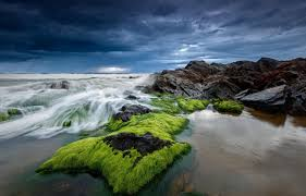 صور ورد على البحر البحر و ما يحمل من رسائل قبلات الحياة