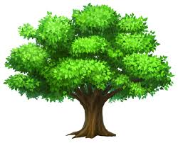 Image result for tree in summer
