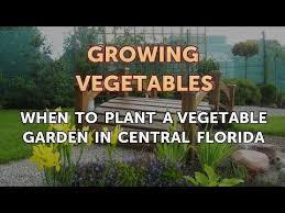 vegetable garden in central florida