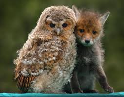 Unlikely Animal Friends | Unlikely animal friends, Animals ...