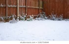 Garden Covered Snow Winter Flowers Covering Nature Stock Image 1181714044