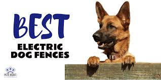 Best Electric Dog Fences Review Top 10 Best Performing Dog Fences
