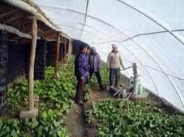 underground greenhouse insteading