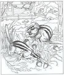 Kleurplaat Natuur Rondom Het Huis Eekhoorns Dieren Kleurplaten