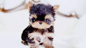 puppy wallpaper for desktop 2020 cute