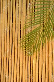 A Bamboo Fence And Palm Tree Leaf In The Tropics Stock Photo Picture And Royalty Free Image Image 12306012