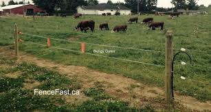 Cattle Fencefast Ltd