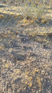 California Animal Control Removes 19 Rattlesnakes From Children S Playhouse