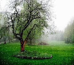 صور مطر وأجمل خلفيات أمطار ميكساتك