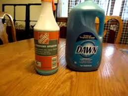 dish soap bug you