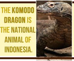 komodo dragon your daily quotes it