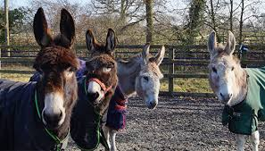 Fun for all the family at Redwings Ada Cole! | Redwings Horse Sanctuary and  Equine Veterinary Centre