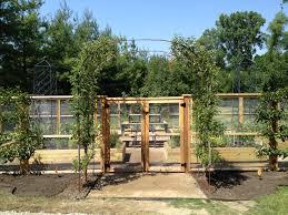 vegetable garden fencing dirt simple