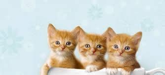 Eres amante de los gatos? Te compartimos 15 datos curiosos ...