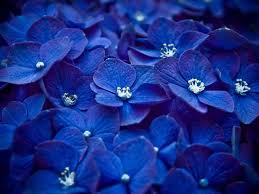 خلفيات لون ازرق الالوان التى تتناسب مع اللون الازرق اثارة مثيرة