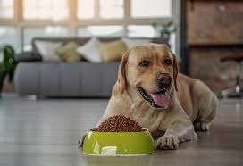 homemade dog food recipes that your pet