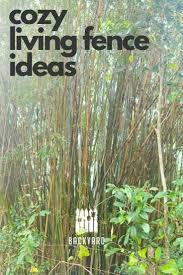 10 Breathtaking Living Fence Ideas Backyardscape