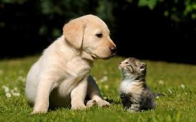 cute puppy and kitten wallpapers 58