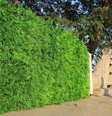 Top 10 Hedge Fence Brands And Get Free Shipping 4ak8hk21