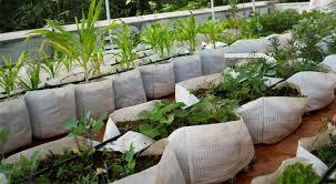 rooftop garden container 02 auroville