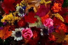 fall flowers wallpaper best of 40
