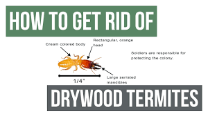 Get Natural Way To Kill Termites Background